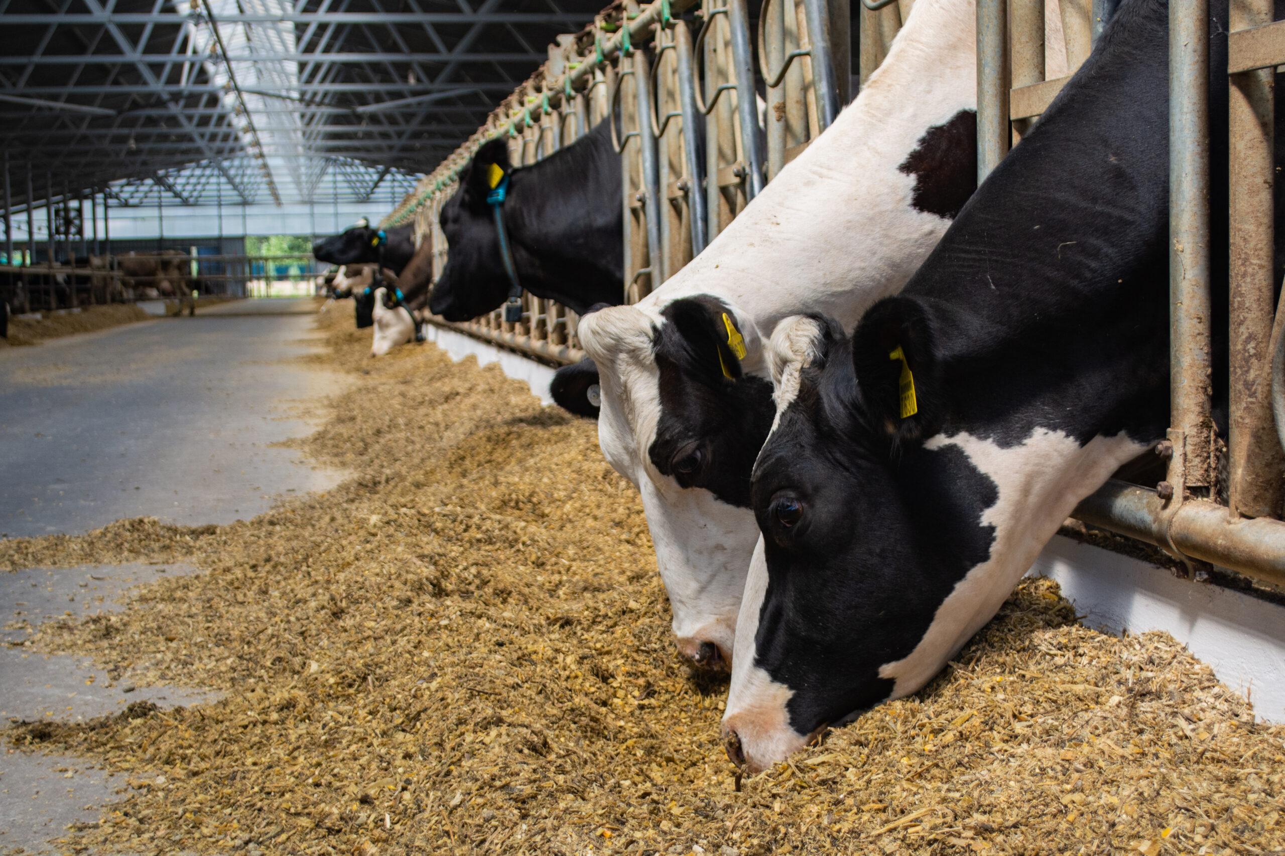cubiertas de panel sándwich para granjas